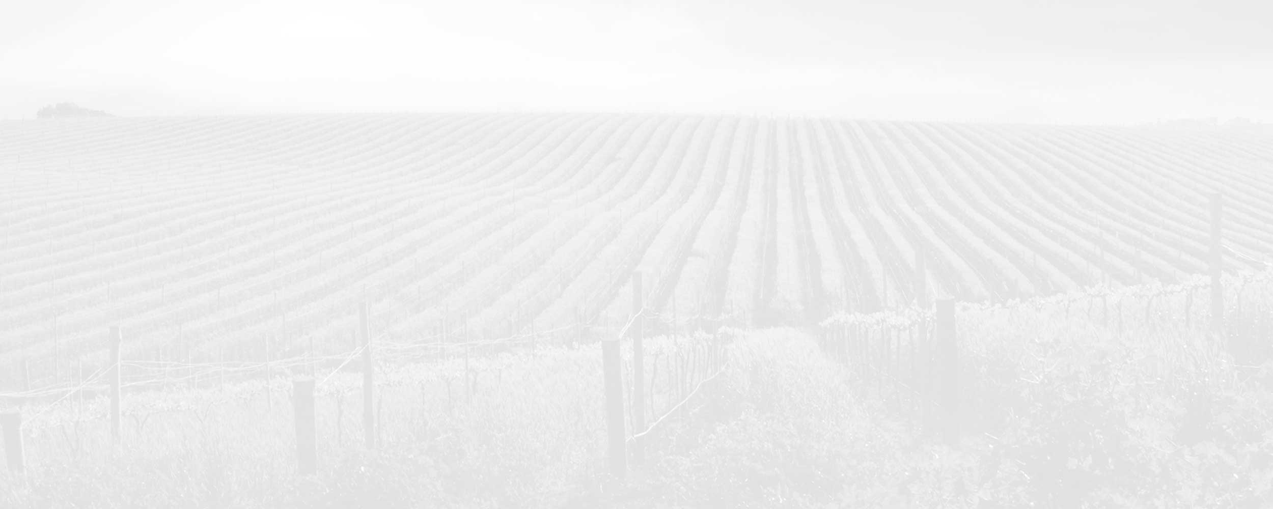 Grayscale background photo of a winery vineyard