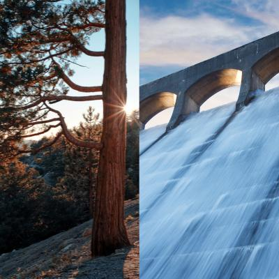 Pine tree on left side of image, water flowing through dam on the other